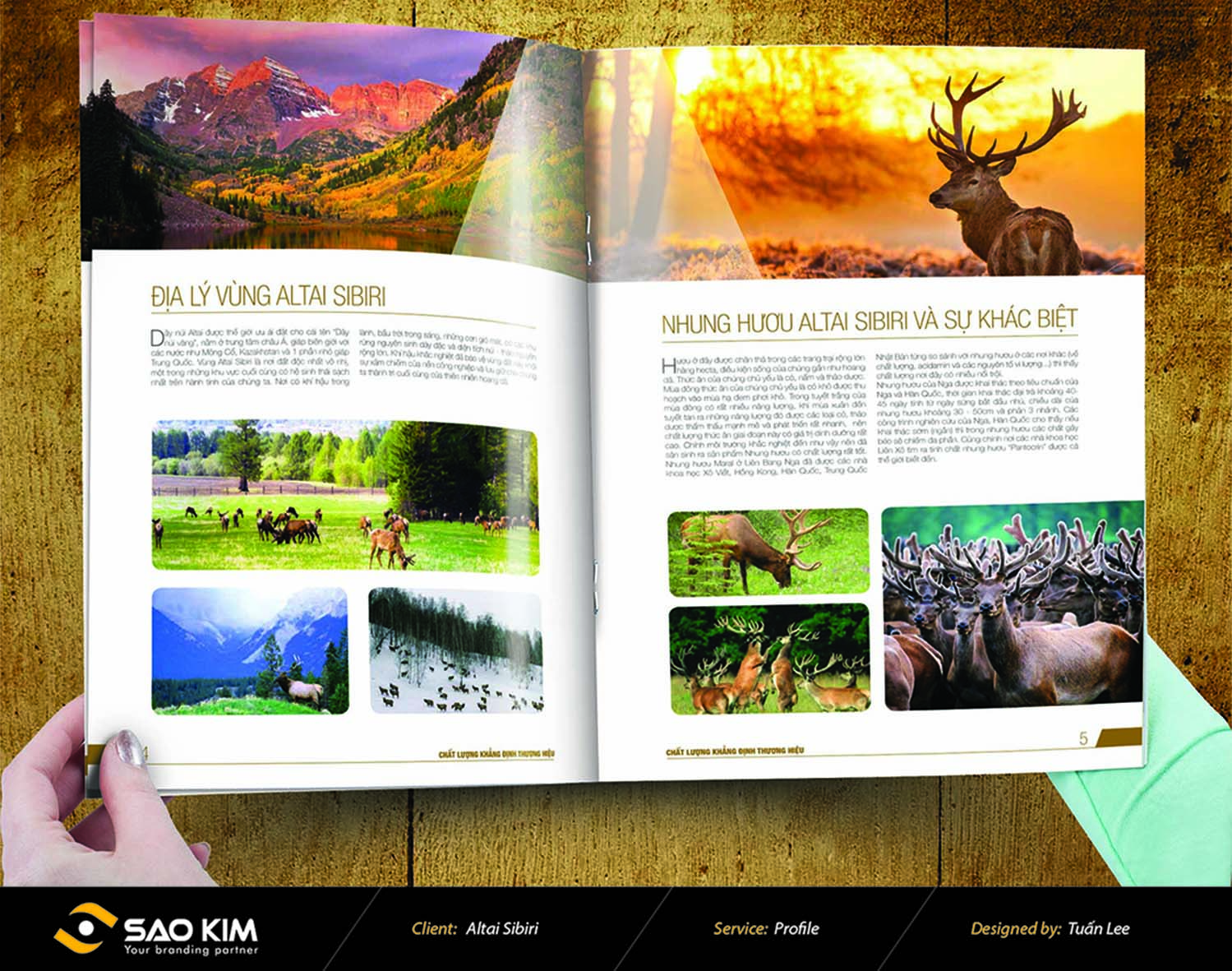 Thiết kế brochure Altai Sibiri tại Hà Nội