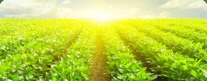 Gói thiết kế nhận diện thương hiệu cho công ty nông nghiệp - ảnh từ SaoKim Branding