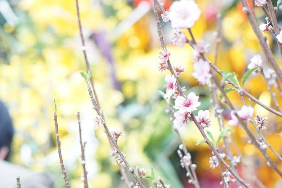 Du xuân Lạng Sơn tết Bính Thân - ảnh từ SaoKim Branding